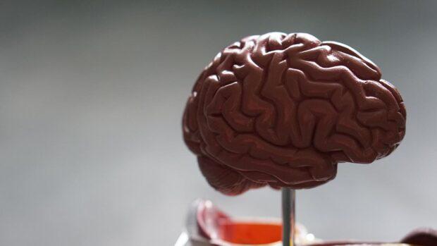 plastyczność mózgu